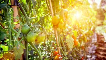Gemüsegarten für Anfänger: 9 Gemüse, die jeder hinkriegt ...