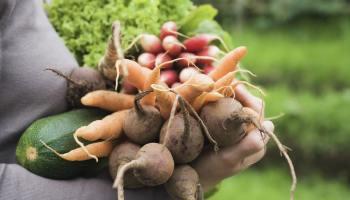 43 Kräuter Obst Und Gemüsepflanzen Die Auch Im Schatten Wachsen