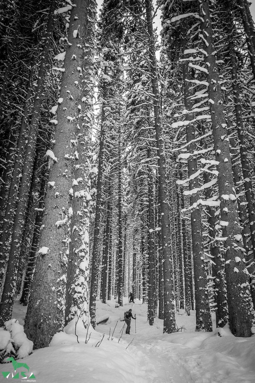 Wald im Schneekleid