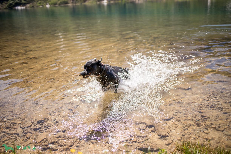 Hunde Badespaß am Tappenkarsee
