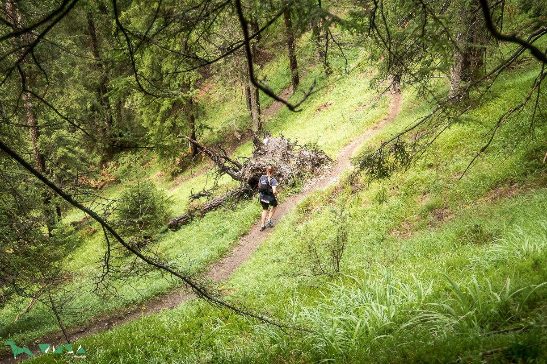 Downhill zur Salvesenklamm.