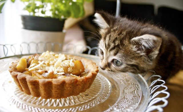 cute,kitten,pastry,apple,tart,lick,eat,eating,cat
