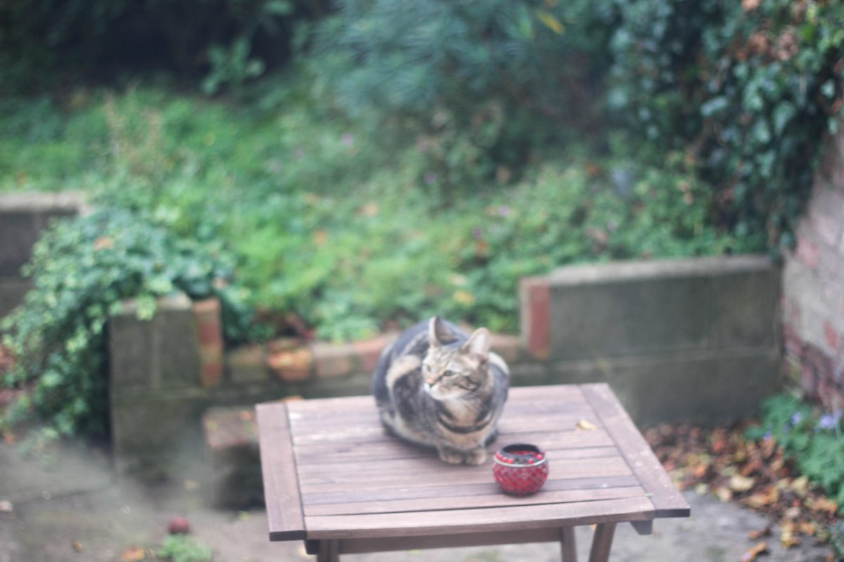 cat, garden, sitting, Chicken, Gluten Free, Stuffing, lifestyle blog uk, lifestyle, lifestyle blog, gluten free blog, gluten free blogger uk, gluten free recipes,