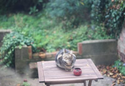 cat, garden, sitting, Chicken, Gluten Free, Stuffing, lifestyle blog uk, lifestyle, lifestyle blog, gluten free blog, gluten free blogger uk, gluten free recipes,