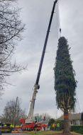 Tree Cutting p-1