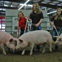 Meade County Fair  Swine Show Results