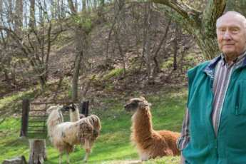 Elderly man standing on his alpaca farm