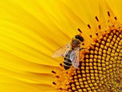 Lezing over wilde bijen door Arie Koster op 27 februari in Zwolle Zuid bij het Zone College