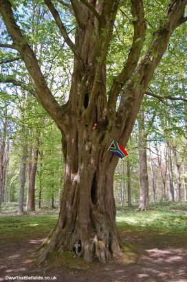 Last Tree at Delville Wood
