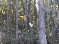 1600x1200 Flying, in Lewis lake, by John S. Quarterman, for WWALS.net, 17 May 2014