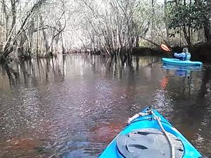 300x225 Movie: Structure (3.1M), in Alapaha deadfalls, by John S. Quarterman, for WWALS.net, 17 January 2015