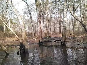 300x225 Movie: Up (2.7M), in Alapaha deadfalls, by John S. Quarterman, for WWALS.net, 17 January 2015