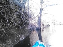 640x480 Blue boat, in Statenville to Sasser Landing on the Alapaha River, by John S. Quarterman, for WWALS.net, 15 February 2015