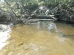 Fish bed below log, 31.0282650, -83.4706650