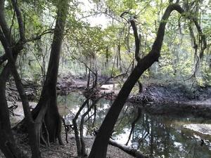 KIMG7418 Downstream framed by trees