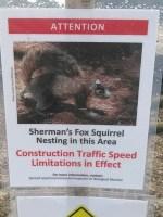 Fox squirrel sign, 30.3918 -83.15291