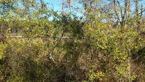 Movie: Red pipe, Okapilco Creek, Little Creek, Coffee Road, w. of GA 333, 30.9182490, -83.5904850