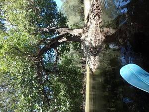 Island Tree 30.5543683, -82.7240050