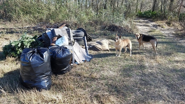 Bags of trash with reference dogs