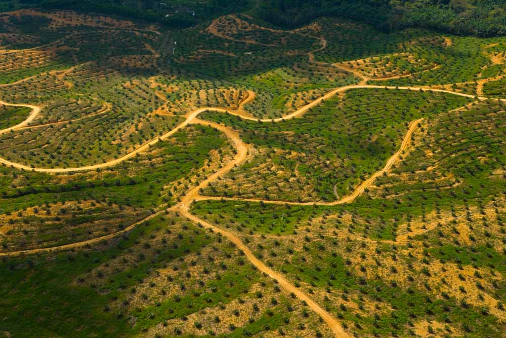 Winding road through hills of Palm Oil Plantations