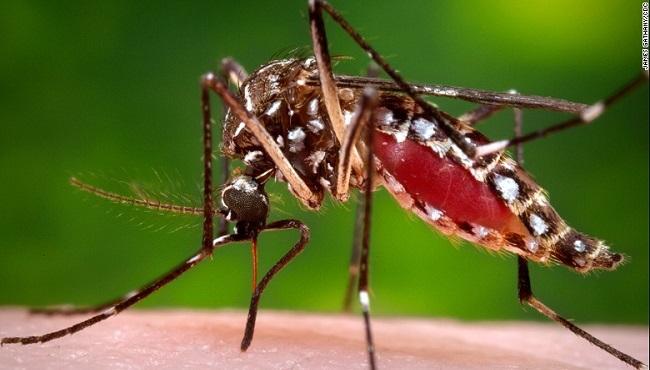 aedes mosquito dengue_254145