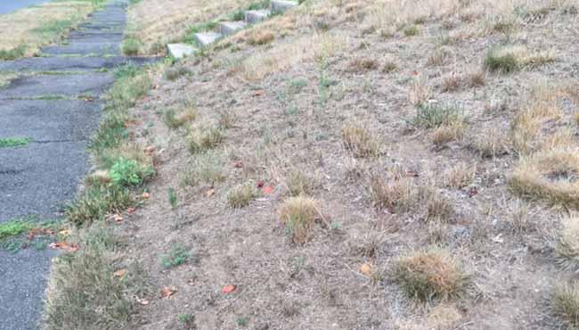 dry grass holyoke_434701