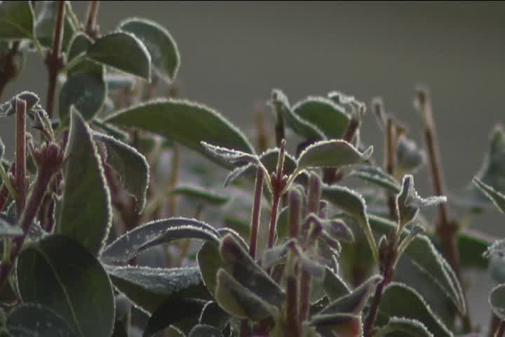 frost on leaves_278377