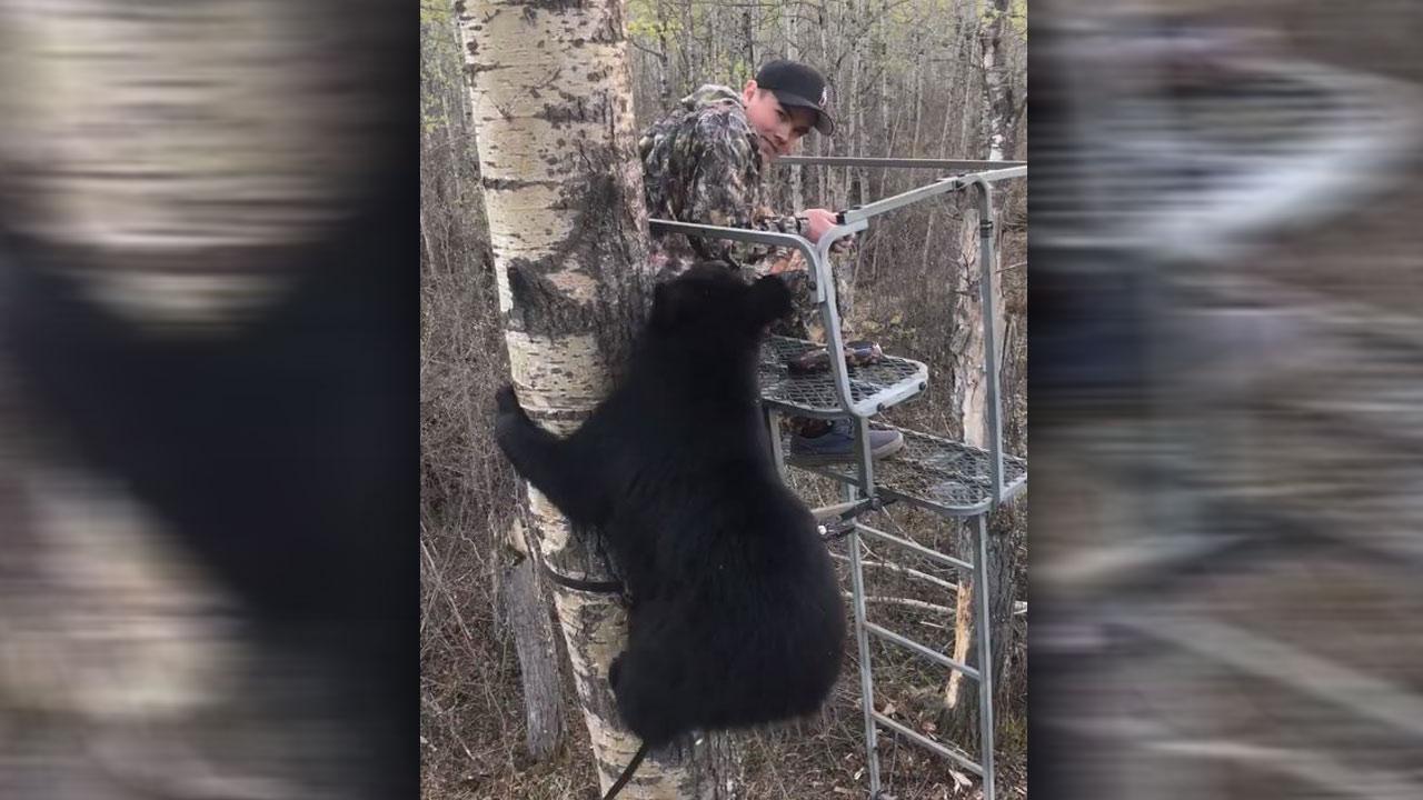 black-bear-cub-encounter_1526564356742-873772846.jpg