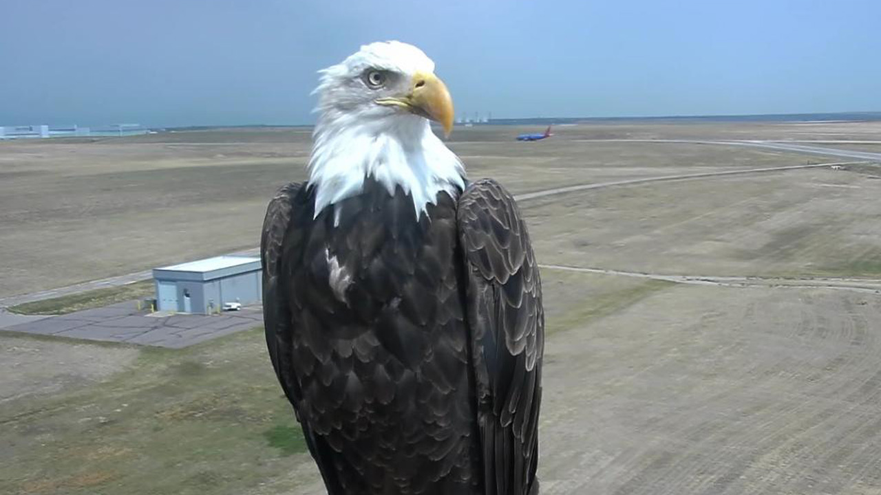 bald-eagle-selfie_1533216792397-873772846.jpg