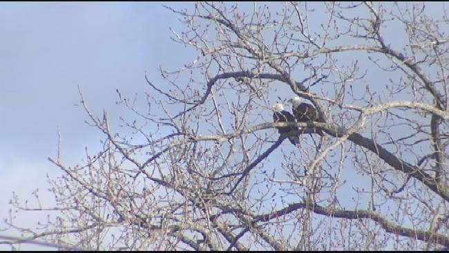 eagles nest_814267