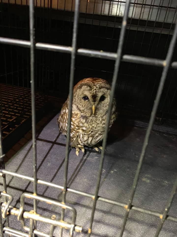 hadley owls 2_1548429891555.jpg.jpg