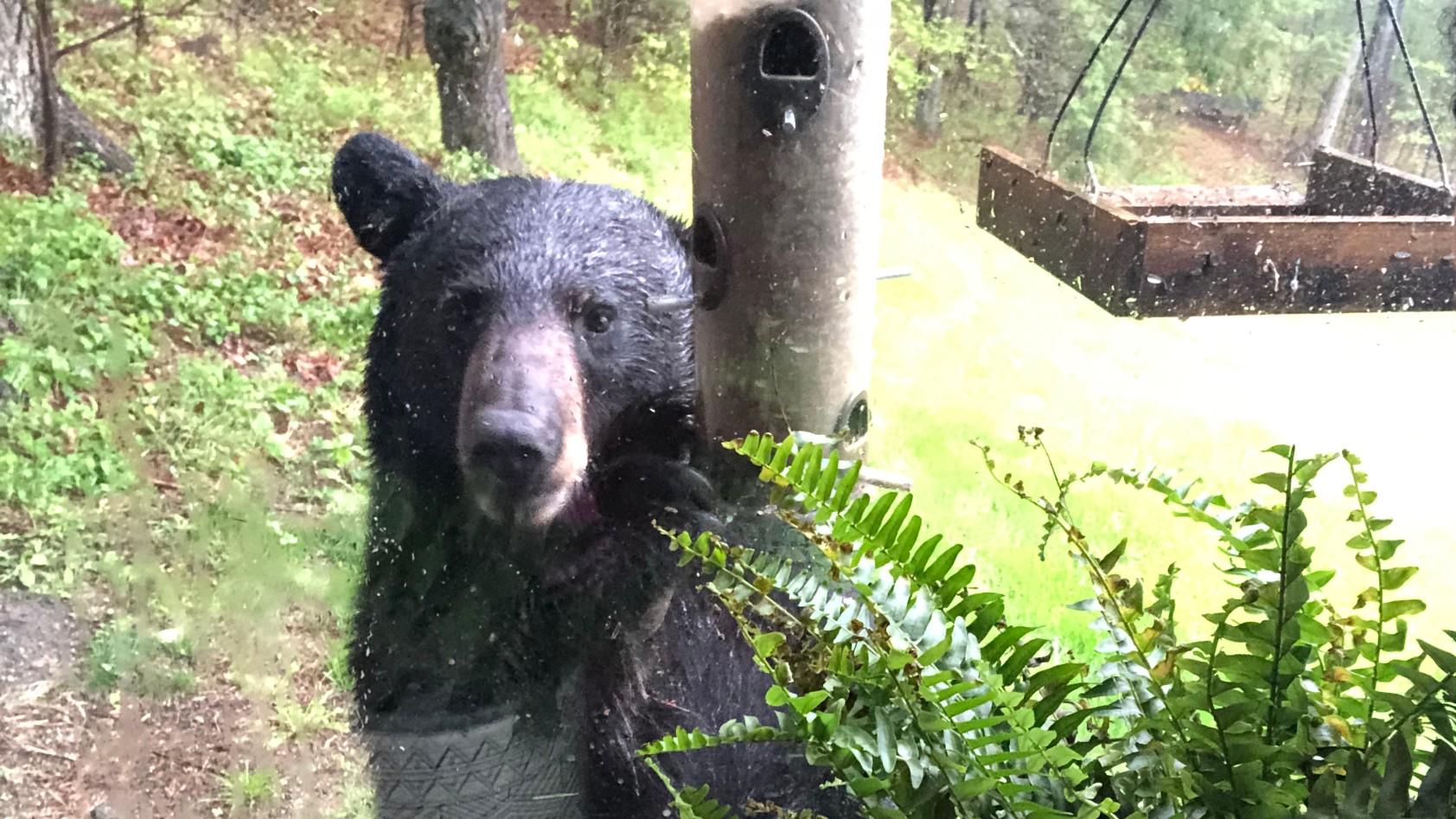 brimfield bear_1557707585316.jpg.jpg