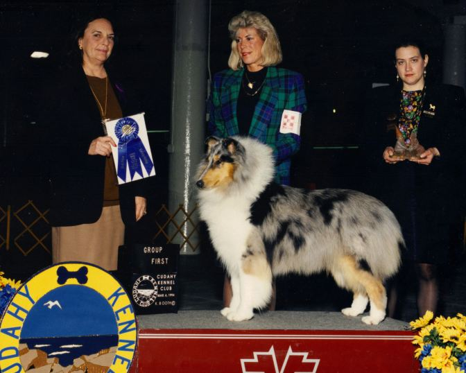 Blue Merle Collie - Ch. Highcroft Wyndlair Azure
