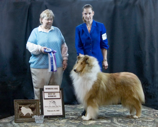 Sable Merle Collie - Ch. Southland's Beyond The Glory