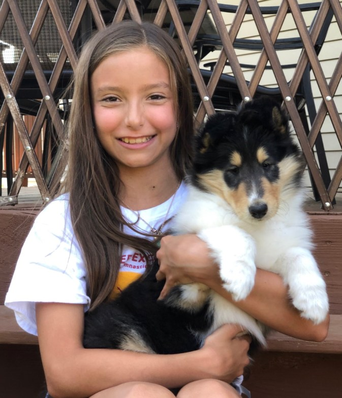 Tri-Color Rough Collie Puppy and child