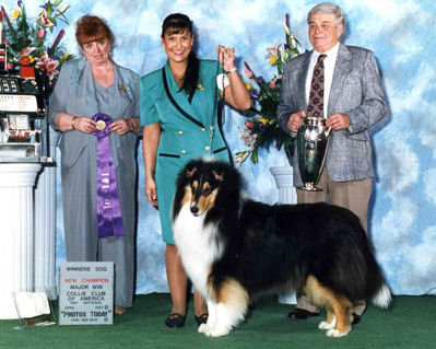 Tri-Color Collie - Ch. Mystic The Meadows Classique