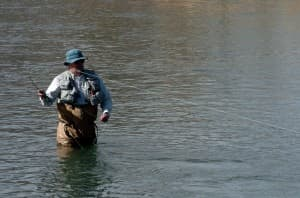 Fly-fisherman Jim Harris casts his line on the Shoshone River, near Cody.  (Ruffin Prevost/WyoFile - click to enlarge)
