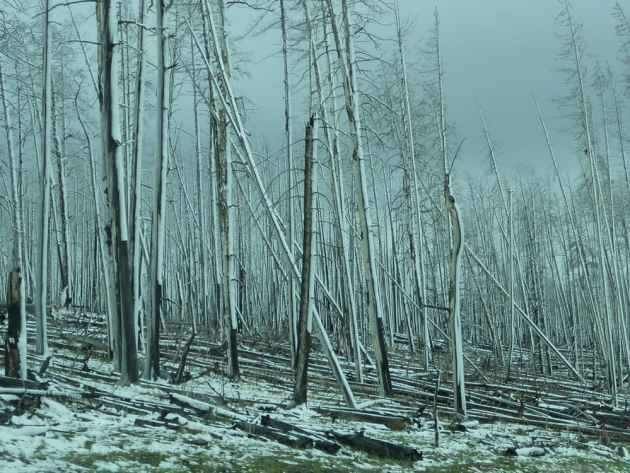 Forest of Grey