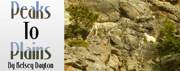 Mountain Goats threaten Bighorn Sheep