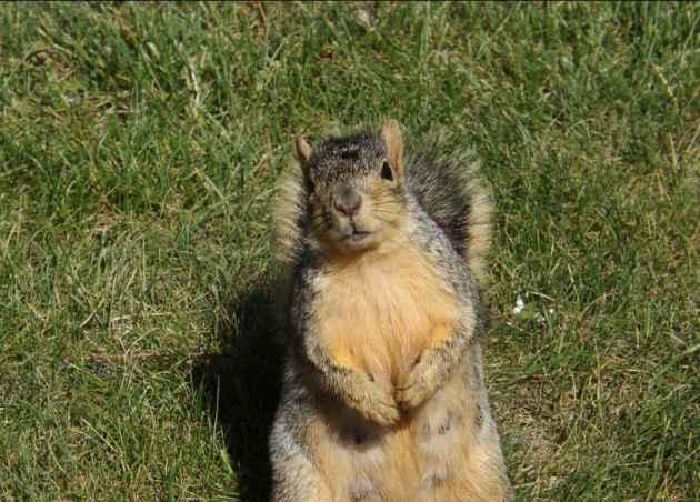 Dear Friend, Spare A Nut?