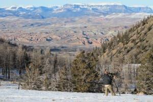Bighorn sheep photographer