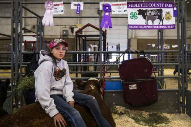 Cassidy Espenscheid sits comfortably atop her heifer at the Sublette County Fair in Pinedale, WY. (Cr. Louise Johns - click to enlarge)
