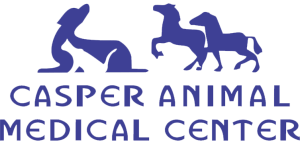casper animal medical center
