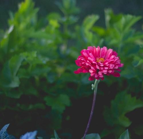 Mid-Summer Garden Update | Wyse Guide
