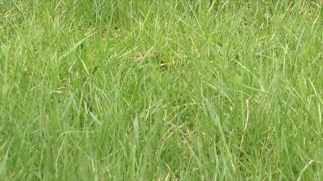 Grass generic_73344