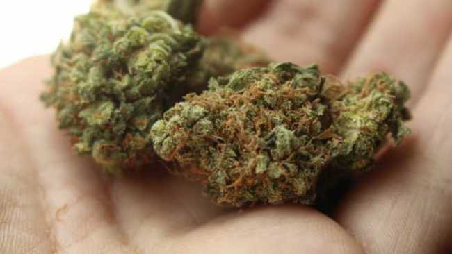 medical marijuana generic