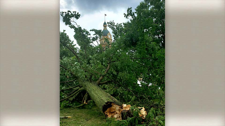 Tree down in courthouse Square in Warren, Ohio from Lindsay.
