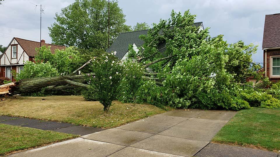 Tree down on Meadowbrook in Warren, Ohio from Bill.