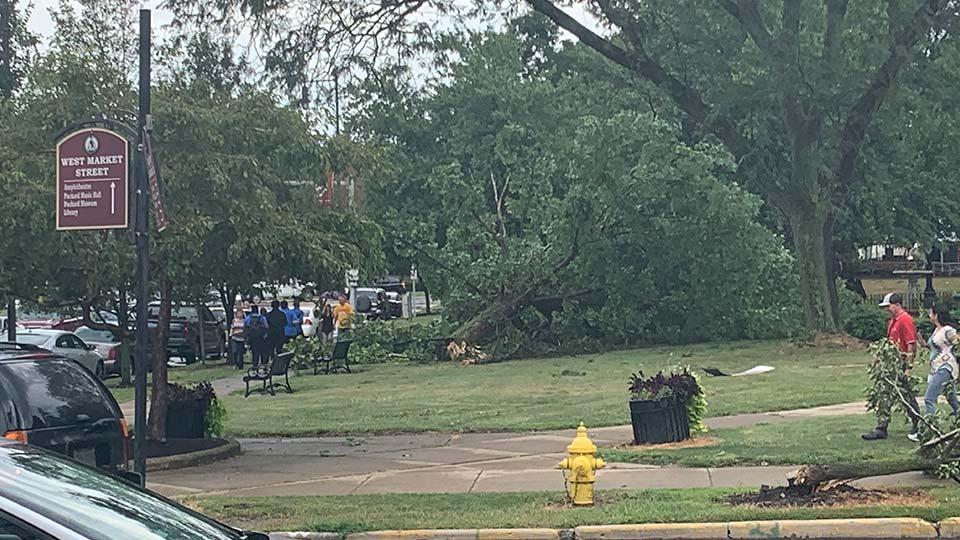 Tree down on West Market Street in Warren, Ohio.