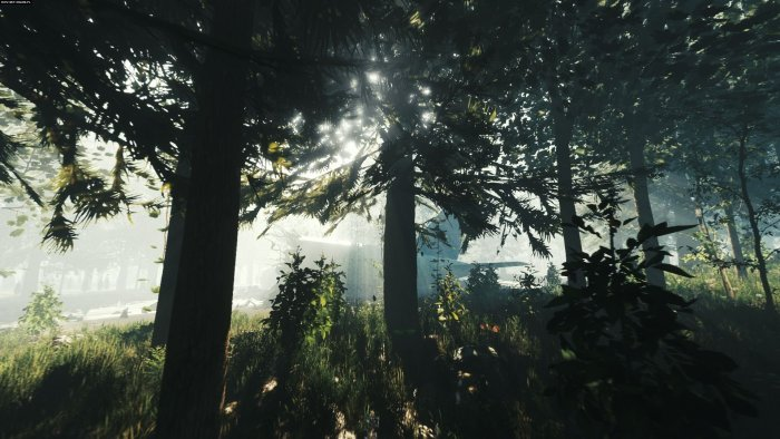 The Forest download for free